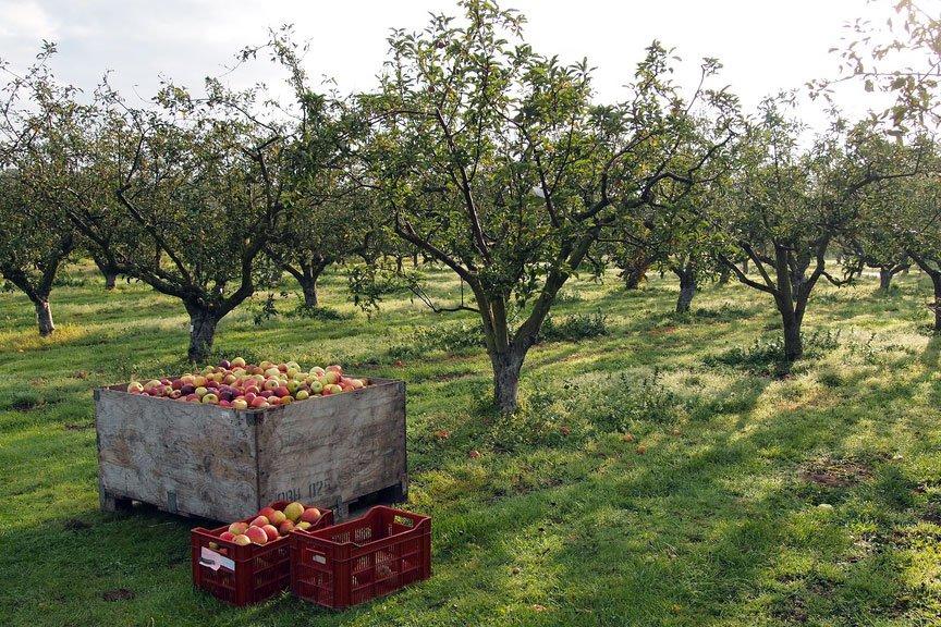 fruitfarm A234