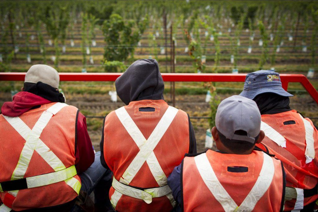 o-CANADA-MIGRANT-WORKERS-facebook